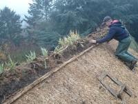 Czytaj więcej: Dom pod strzechą trzcinową z kwiatami i trawą w kalenicy